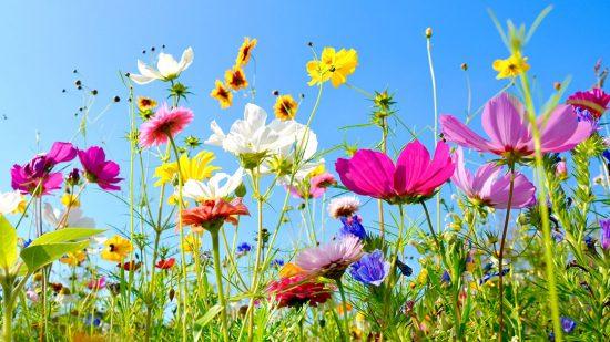 Hyvää ja rentouttavaa kesää!