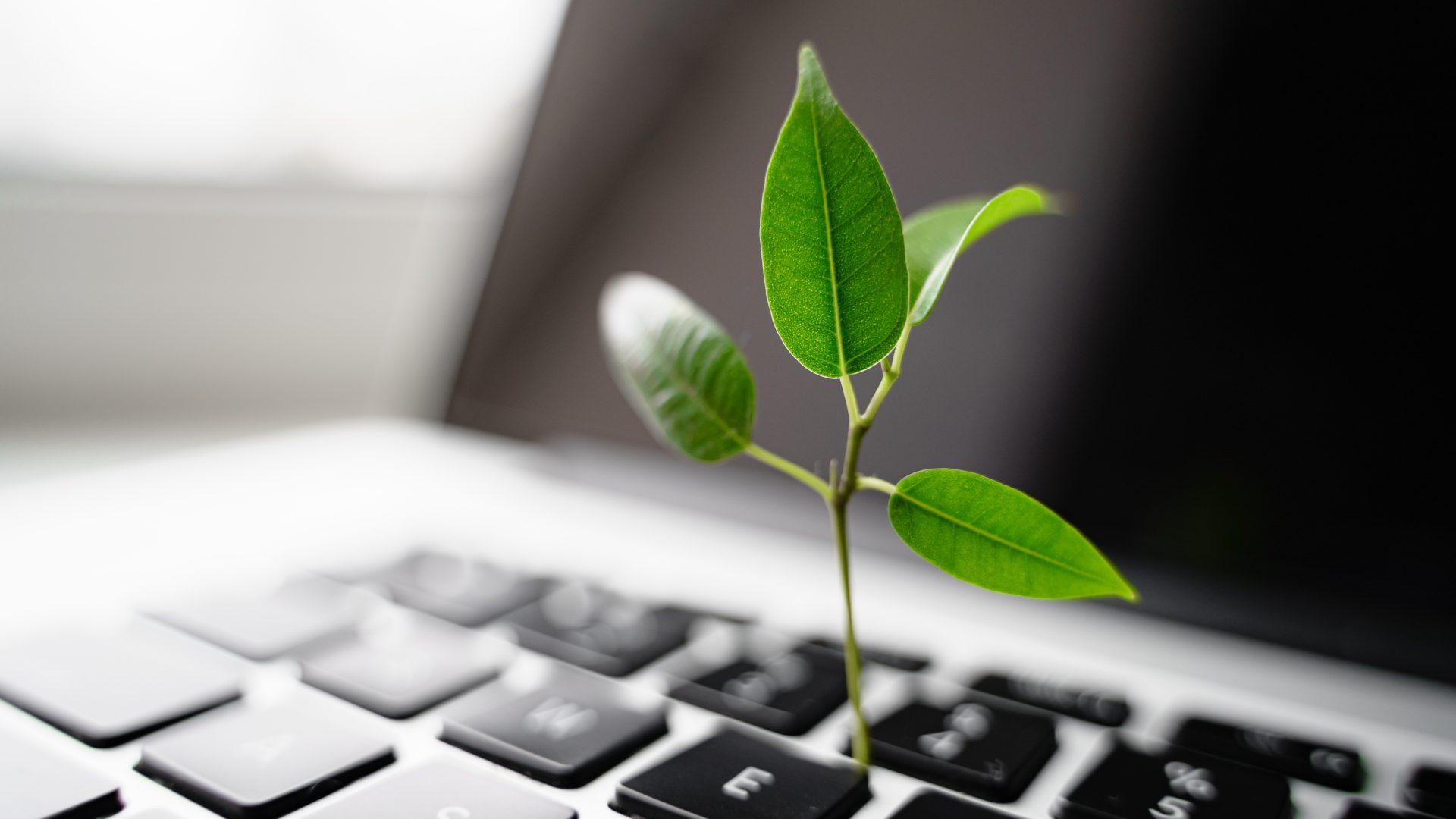 Green ICT -tapahtumat ja julkaisut
